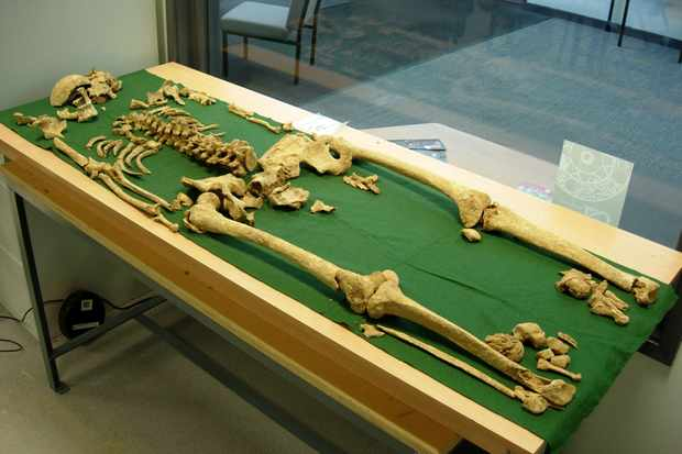 Could this be the skeleton of a Bronze Age king?