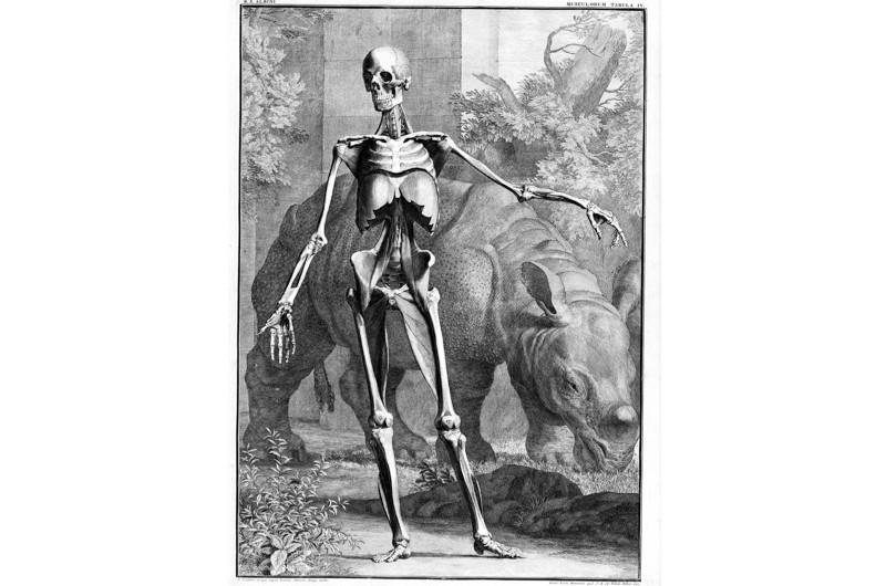 Strange-skeleton-2-7160f39