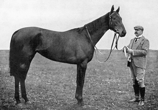 Bay filly , Sceptre.  Photo by W A RouchWinner of the St Leger 1902.  Owned by W A H Bass.