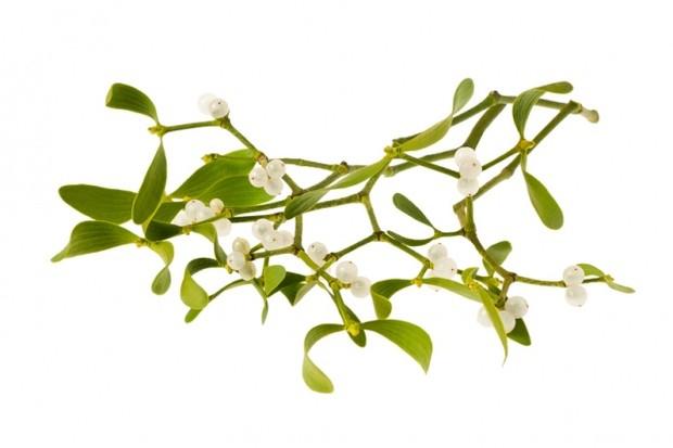 Mistletoe. (Photo by Alfio Scisetti/Dreamstime.com)