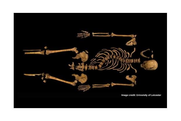 skeleton525-d121144