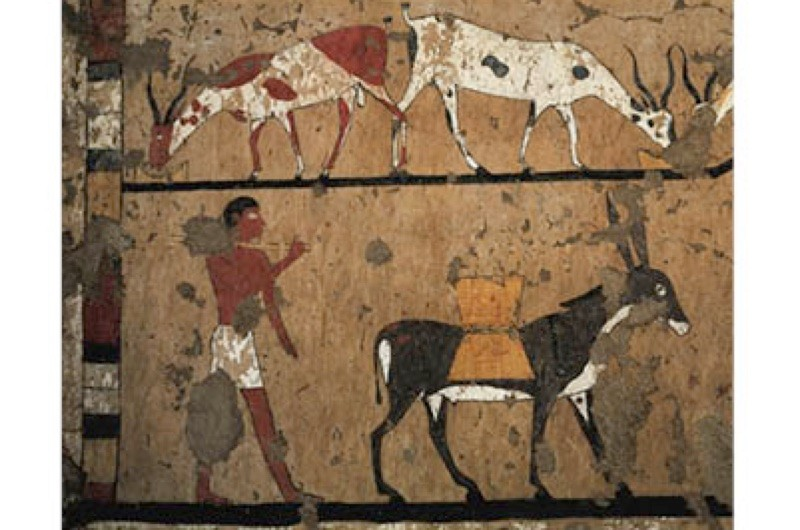 Fresco on the Tomb of Iti showing the transportation of wheat by donkey. Donkeys were more commonly used by the Ancient Egyptians than camels. (Photo by DeAgostini/Getty Images)