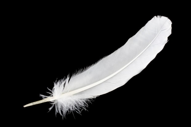 white-feather-2-3ff1b13