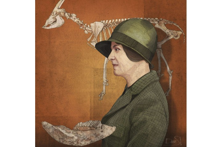 Dorothea Bate. (Illustration: Stavros Damos for BBC History Magazine)