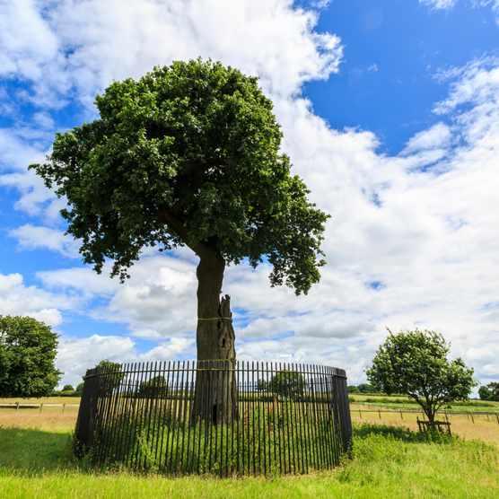 The Charles II Royal Oak