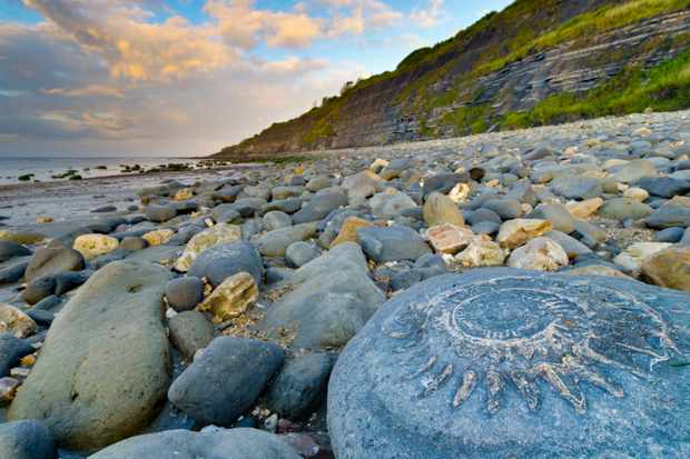 The beach at Lyme Regis, on the Jurassic Coast of Devon and Dorset, has attracted fossil hunters for centuries. (Getty Images)