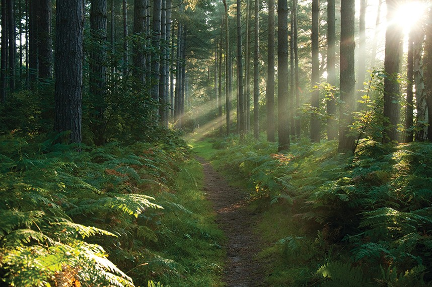Sunlight dapples a clearing in Sherwood Forest, which was an essential resource for peasants centuries before it became a tourist attraction (Photo by Alamy)