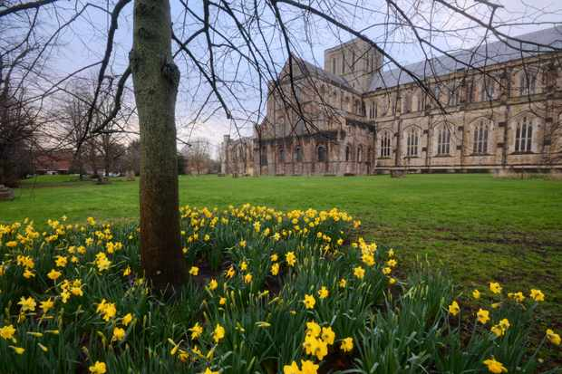 Daffodils at Winchester Cathedral. (Photo by Getty Images)
