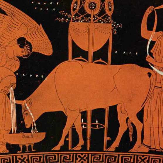 An ancient Greek vase depicts animal sacrifice of a cow by two women