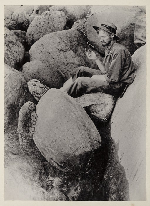 William 'King' Bell, photographed with a turtle during his residence on the Pacific island of Raoul. (Photo courtesy of Lydia Syson/Mr Peacock's Possessions)