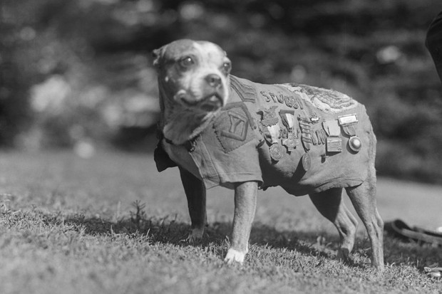 Sergeant Stubby, an American dog who served as the mascot of America's 102nd Infantry Regiment during the First World War. (Photo by Bettmann via Getty Images)