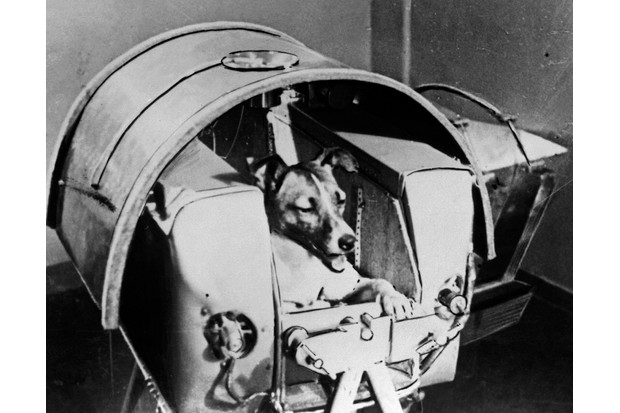 Russian cosmonaut dog Laika, c1957. Laika was the first animal to orbit the Earth, travelling on board the Sputnik II spacraft launched on 3 November 1957. (Photo by Fine Art Images/Heritage Images/Getty Images)