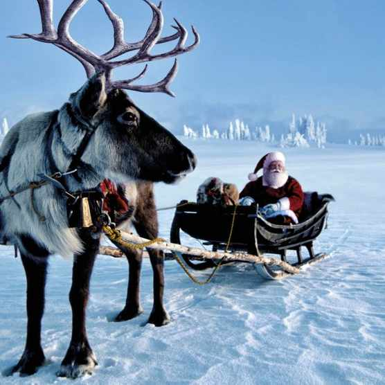 Photo of Father Christmas and reindeer