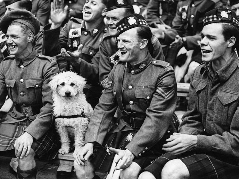 Animals at war: 12 amazing pictures