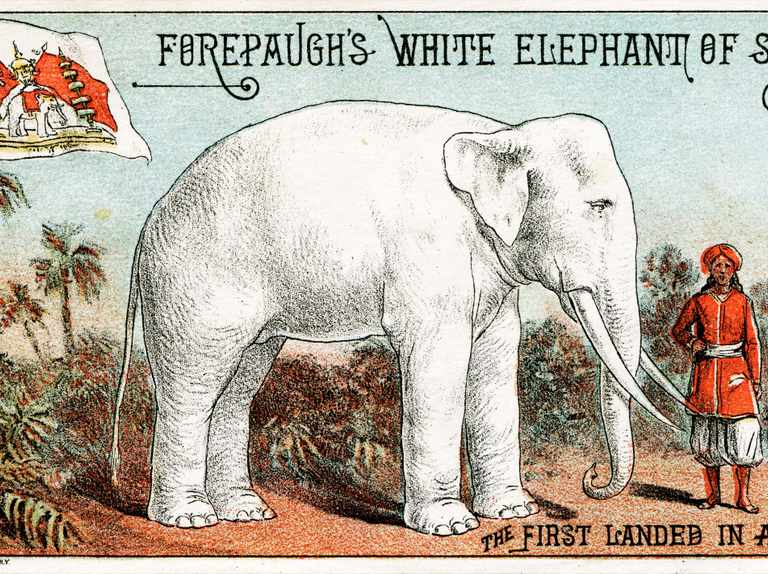 Why do we say 'white elephant'?