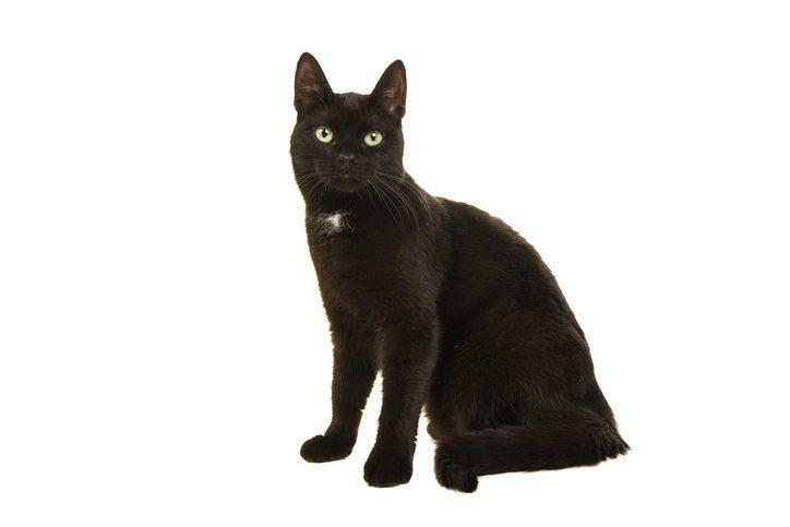 Why Are Black Cats Unlucky? , HistoryExtra