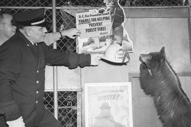 Smokey the bear is presented with a firefighter's helmet
