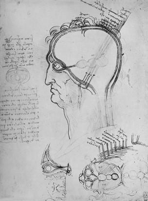 Da Vinci's 'Sections Of A Man's Head'