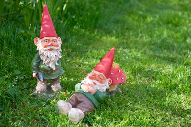 Two garden gnomes on grass