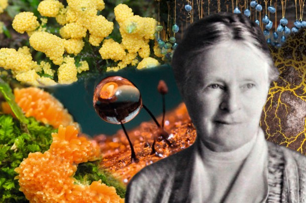 Gulielma Lister became the world's leading expert on slime moulds (Illustration by Rachel Dickins)