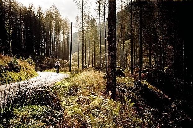 A cyclist rides through a conifer forest near Bala, North Wales
