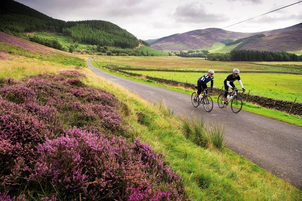 Two cyclists ride past some purple heather