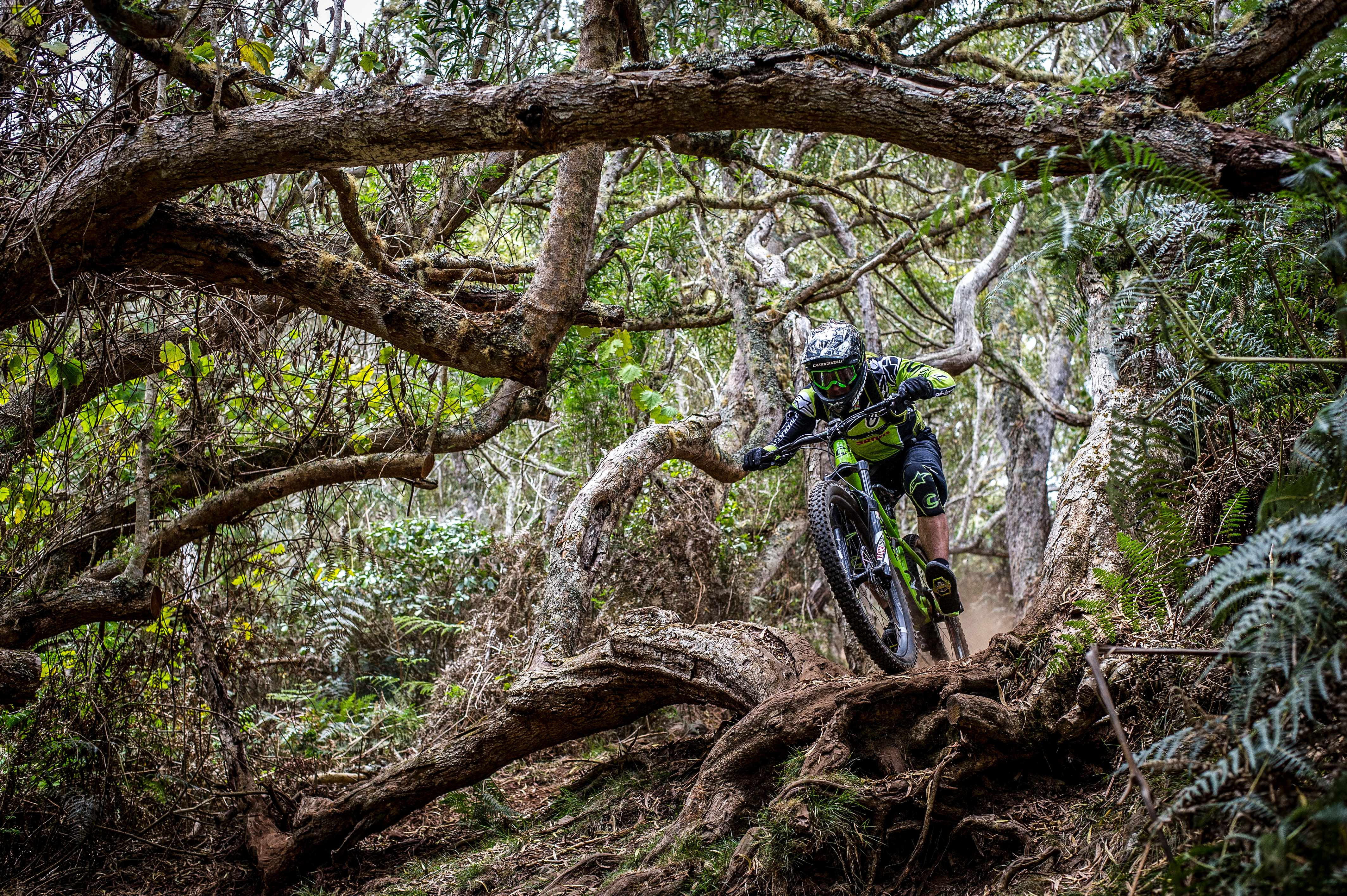 Gnarly roots and trees on reunion island